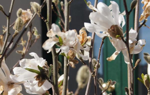 TheProNetBlog_Spring